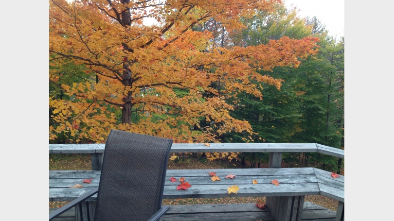Autumn view from back deck